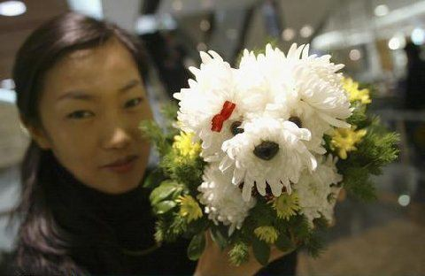 Flower for Pet Lovers 2