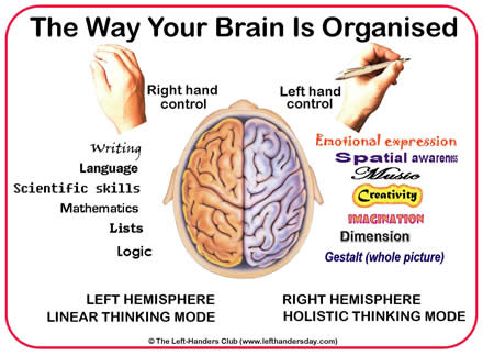 Ambidextrous Brain